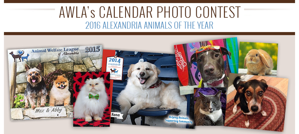 Calendar Photography Contest : Animal welfare league of alexandria awla calendar