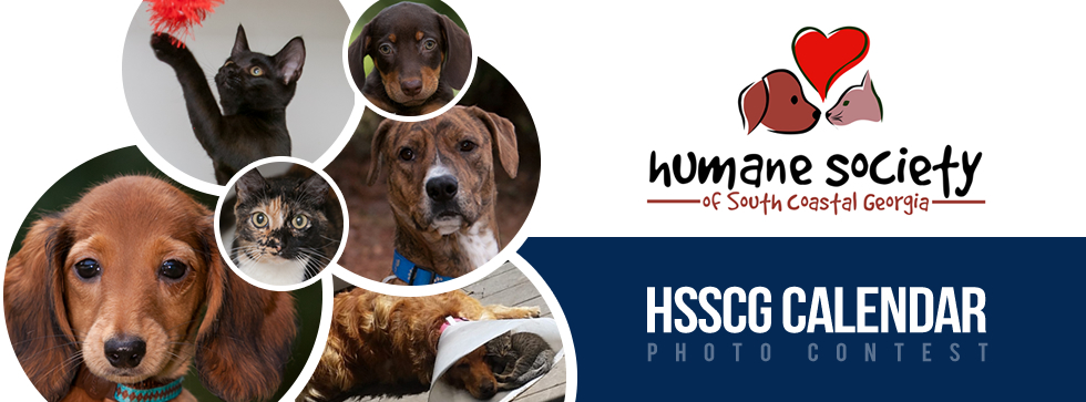 Calendar Photography Contest : Humane society of south coastal georgia hsscg calendar