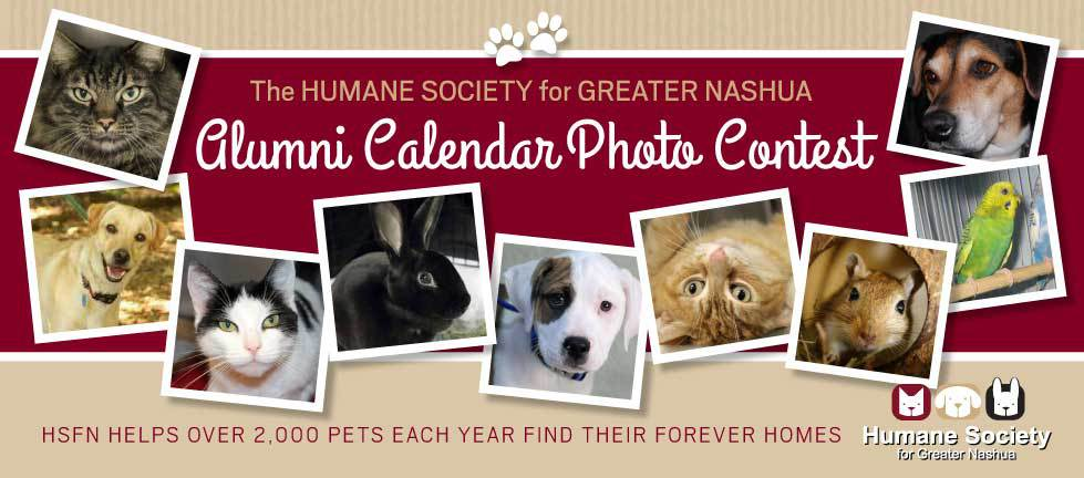 Calendar Photography Submissions : Humane society for greater nashua hsfn photo
