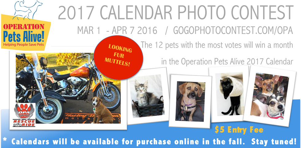 Calendar Photography Submissions : Prizes operation pets alive