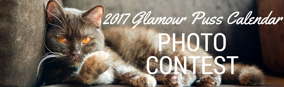Calendar Photography Submissions : For the love of cats glamour puss calendar photo contest