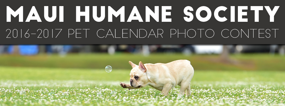 Calendar Photography Submissions : Maui humane society s pet