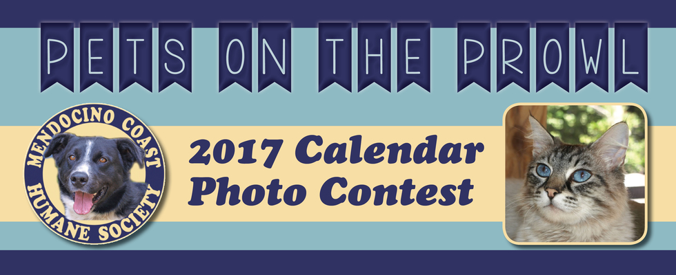 Calendar Photography Contest : Mendocino coast humane society pets on the prowl