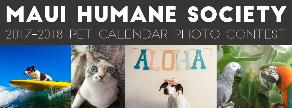 Calendar Photography Contest : Maui humane society s pet