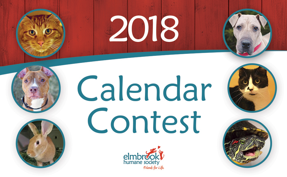 Calendar Photography Submissions : Elmbrook humane society