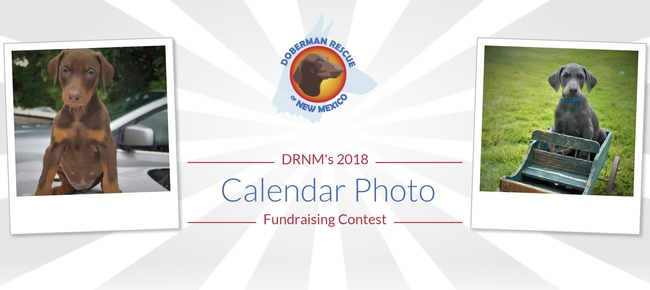 Calendar Photography Contest : Doberman rescue of new mexico drnm photo calendar