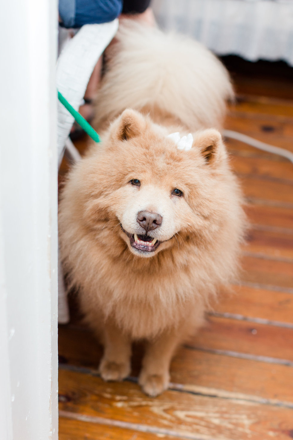 Vote for Bubbe | Chap's Chow Rescue and Chow-Chow Rescue of