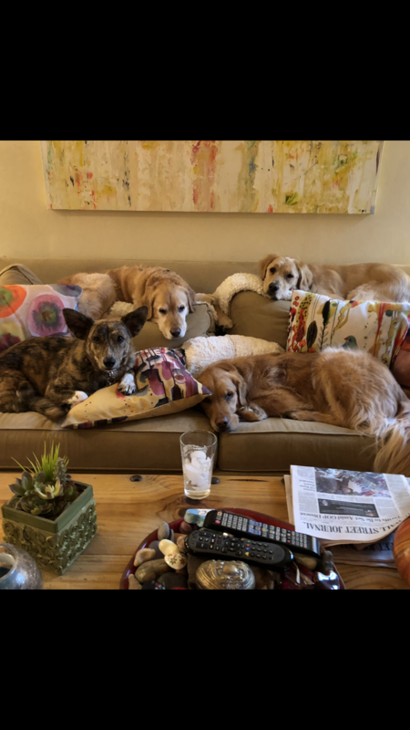 Finn, Ava, lovey,and wilson