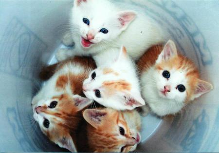 Casper and a bowl of kittens (his brothers & sisters)