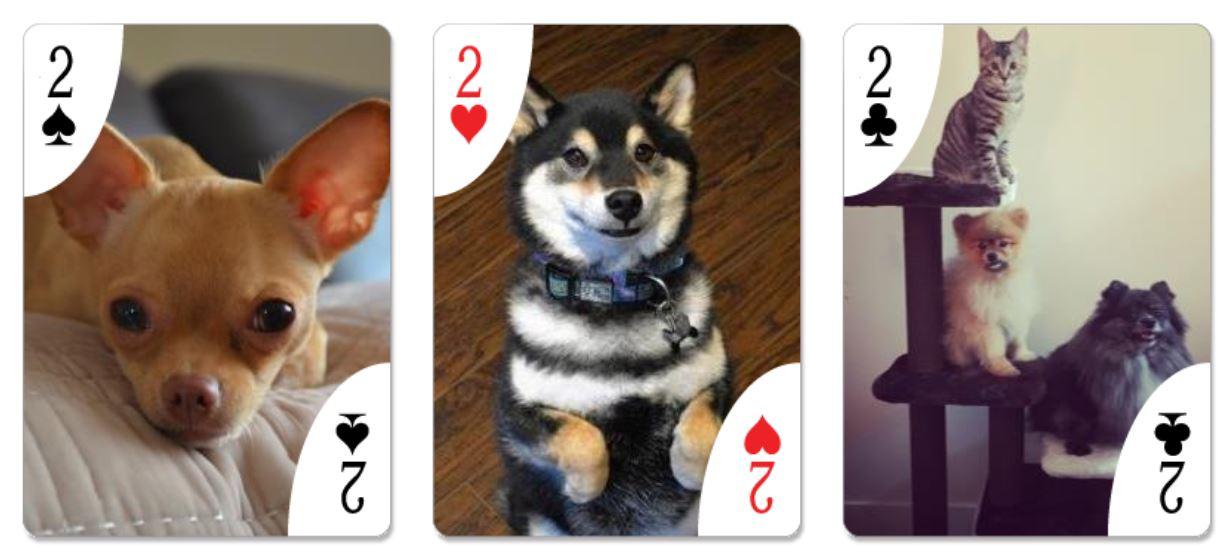 BC SPCA | BC SPCA Calendar Contest