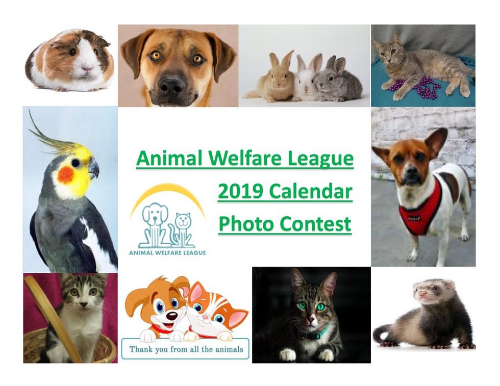 Animal Welfare League Awl 2019 Calendar Photo Contest