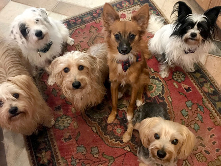 Holly, Mikey, Bugsy, Copper, Joey and Petunia Taylor
