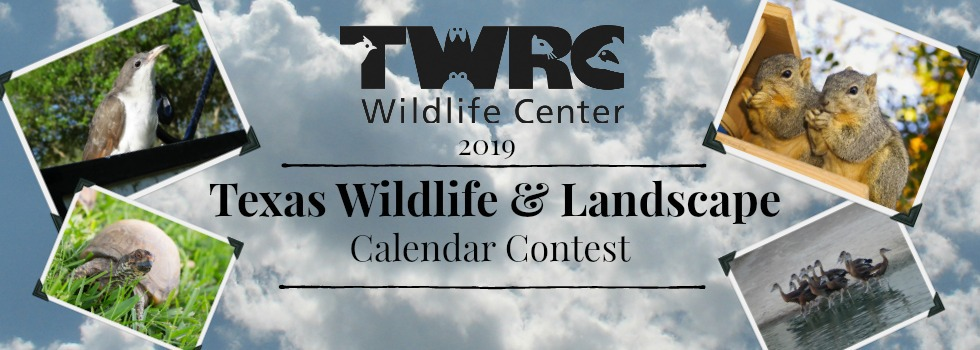 TWRC Wildlife Center's 2019 Calendar Contest