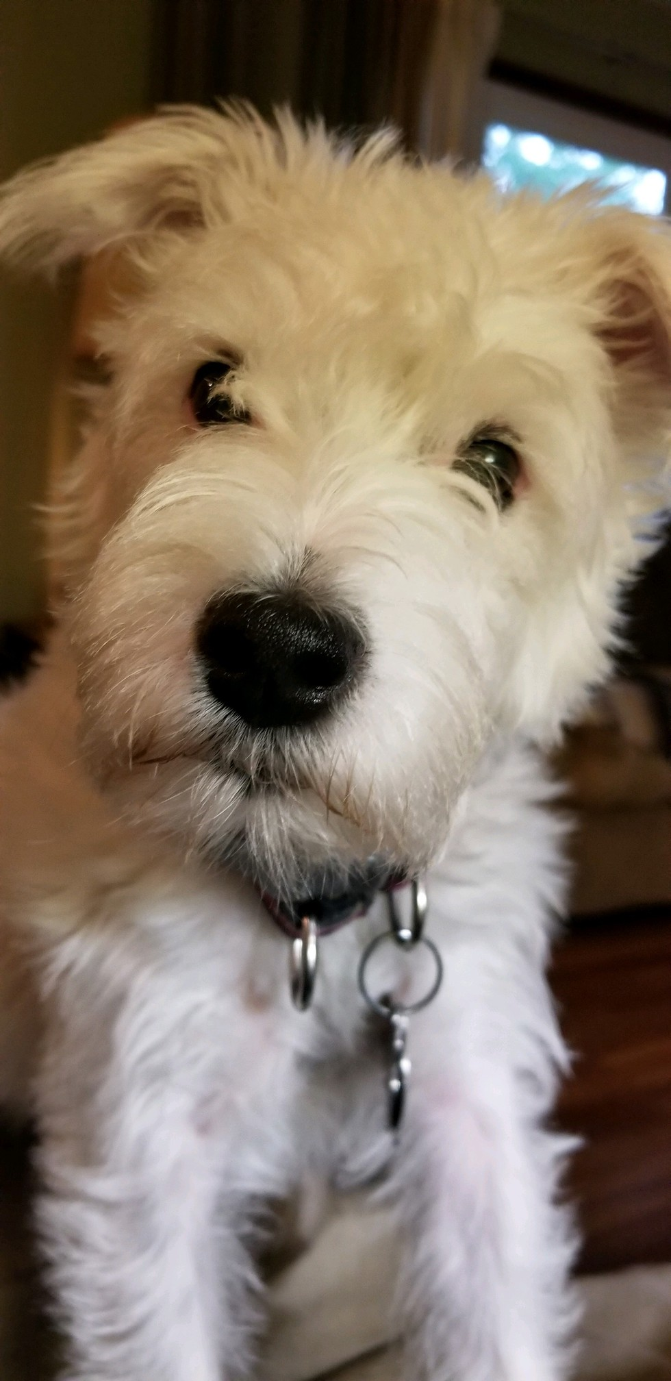 Vote For Daisy 2018 Calendar Contest For The Wood County Humane