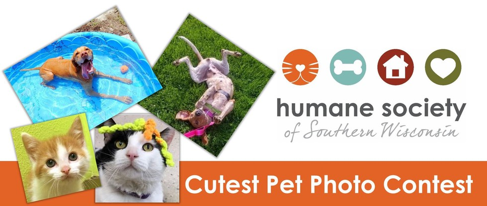 Humane Society Of Southern Wisconsin Cutest Pet Photo Contest
