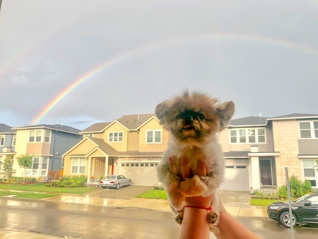 Penny and the Double Rainbow
