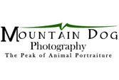 Mountain Dog Photography