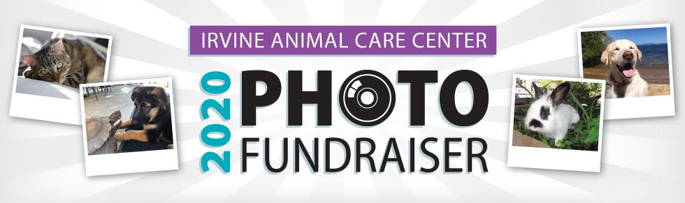 Irvine animal care center casino night bus from orlando to tampa casino