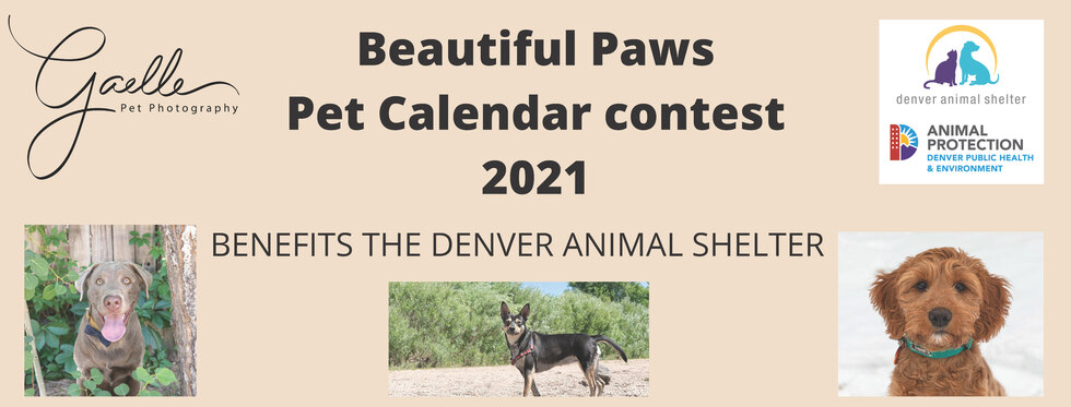 Check out Beautiful Paws Pet Calendar Contest 2021 benefiting The Denver Animal Shelter.