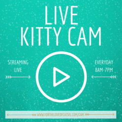 LIVE KITTY CAM