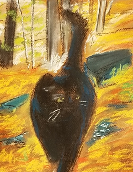 Black Cat in the Forest
