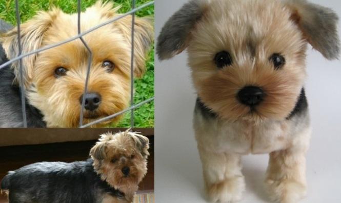 Pet Adoption League Of New York Inc Pet Adoption League Of New