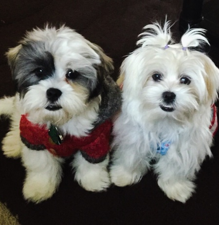 Bentley Cooper & Fluffy Cotton