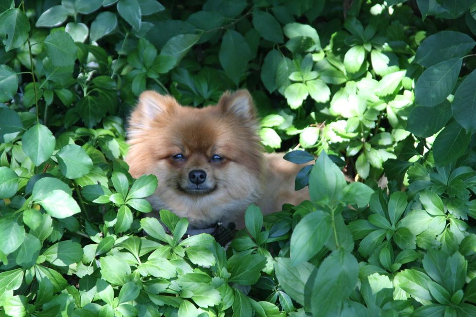 Vote for Zeus | SPCA Serving Erie County Photo Contest