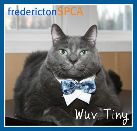 Fredericton SPCA and Tiny the cat