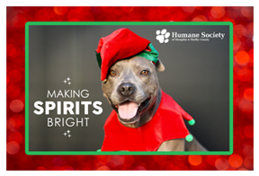 we know your adopted pet is your holiday starbut heres your chance to make sure he is the star of everyone elses holidays as well for a donation of 10 - Humane Society Christmas Cards