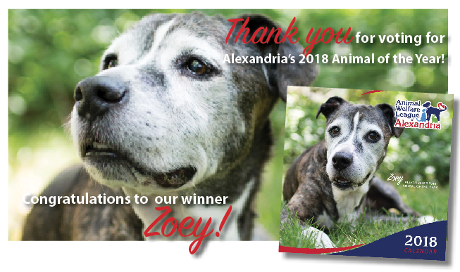 About Animal Welfare League Of Alexandria Animal Welfare League Of Alexandria 2018 Photo Calendar Contest